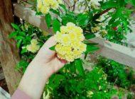زیباترین اس ام اس و متن های عاشقانه در بهار | شعرهای عاشقانه بهاری (جدید)