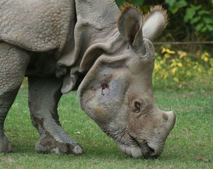 کشنده ترین جانوران جهان | با نزدیک شدن به این جانوران می میرید