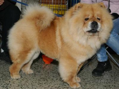 30 نژاد اصیل سگ + عکس | بهترین نژادهای سگ در جهان