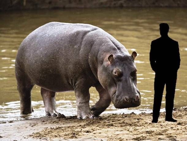 بزرگترین حیوانات زنده کره زمین به همراه مقایسه با جثه انسان