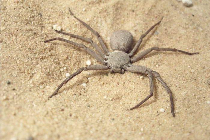 سمی ترین حشرات دنیا + قوی ترین آرواره ها در میان حیوانات