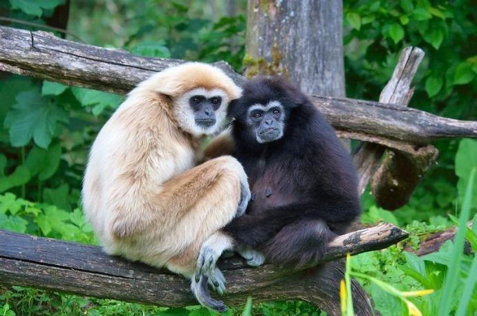 حیواناتی که تا آخر عمرشان با یک جفت زندگی می کنند