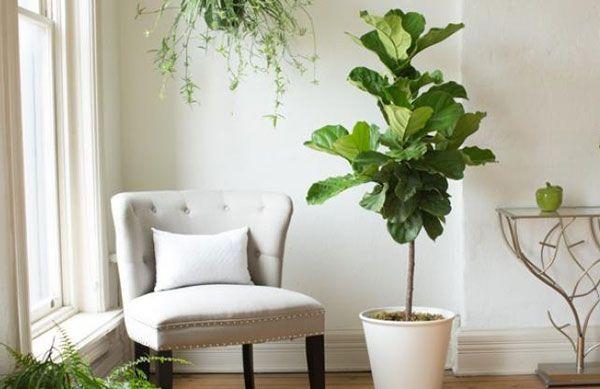 بهترین گیاهان آپارتمانی که هوا را نیز تصفیه می کنند