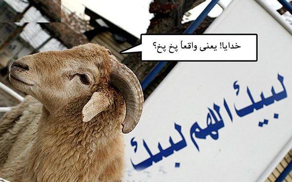 عکس عید قربان خنده دار