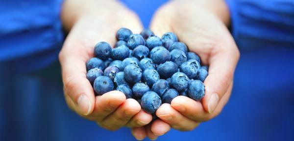 معرفی بلوبری و خواص این میوه لاکچری و خوش طعم