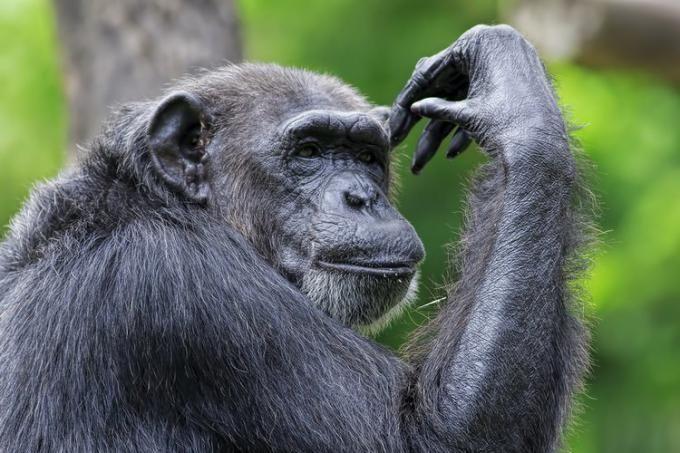 با باهوش ترین حیوانات دنیا آشنا شوید + عکس