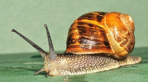 چگونگی جفت گیری حیوانات | عادت های عجیب حیوانات در جفت گیری