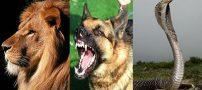 تعبیر خواب سه حیوان که همه در خواب دیده اند | شیر و سگ و مار