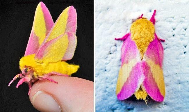دانستنی های جالب و مفید درباره دنیای حشرات که نمی دانستید