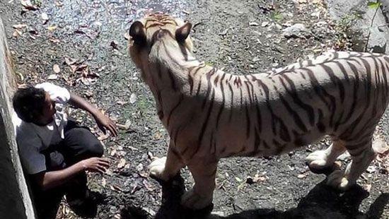 معروف ترین مرگ های انسان توسط حیوانات + تصاویر