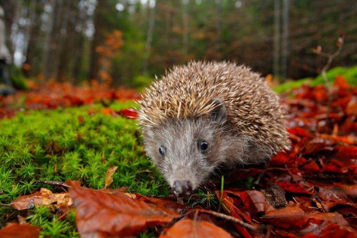 دانستنی های جالب و باور نکردنی درباره حیوانات و رفتارهای شان