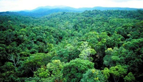 زمین پس از انقراض نسل انسان ها چگونه خواهد شد؟