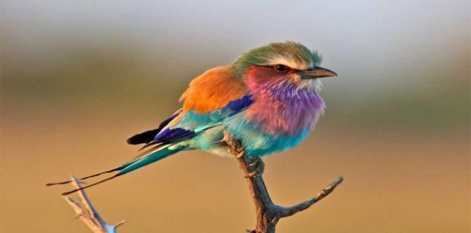معرفی خوش رنگ ترین و سریع ترین حیوانات دنیا + عکس
