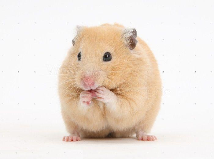 تعبیر خواب موش | موش مرده، موش در حال فرار و موش در خانه