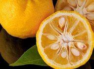 خواص نارنج برای بدن و سلامتی + مضرات و عوارض مصرف نارنج