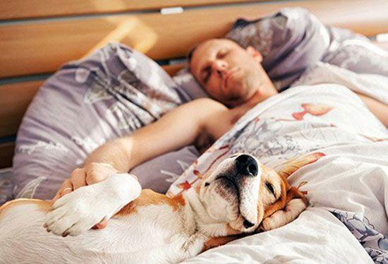 بهترین حالت برای خوابیدن   نحوه درست خوابیدن چگونه است؟