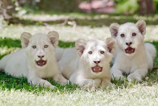 حیوانات خانگی رهبران معروف دنیا + معرفی گران ترین حیوانات دنیا