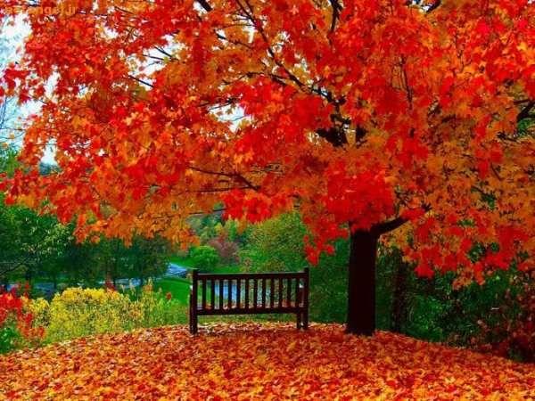 انشا با موضوع فصل پاییز | 8 انشا در مورد پاییز | انشا درباره فصل پاییزی