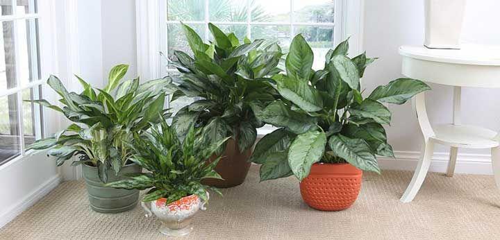 با دوام ترین گیاهان آپارتمانی | زیباترین گیاهان جان سخت آپارتمانی