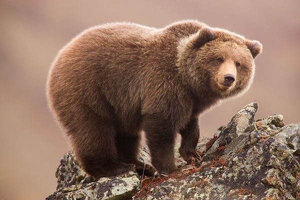 تعبیر خواب خرس + انواع نشانه شناسی دیدن خرس در خواب