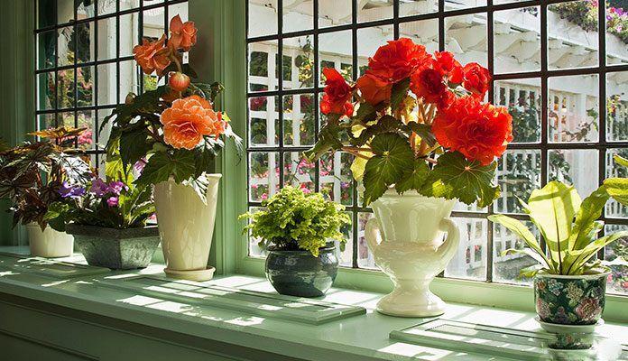 معرفی بهترین درختچه های آپارتمانی + گیاهان آپارتمانی گلدار