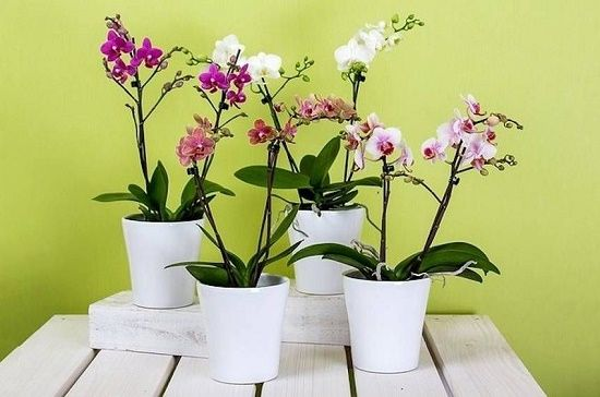 بهترین گیاهان آپارتمانی برای آشپزخانه، حمام و اتاق خواب