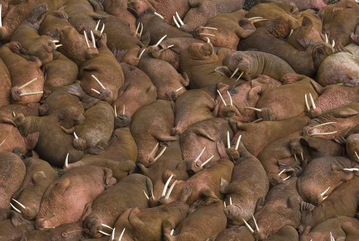 نکات جالب در مورد زایمان و تولید مثل حیوانات + عادات عجیب حیوانات