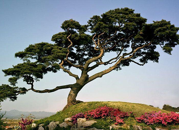 تعبیر خواب گل و درخت + نشانه شناسی دیدن گل و درخت در خواب