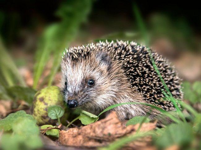حیوانات مظلومی که خطرناک و هم نوع خوار هستند +عکس