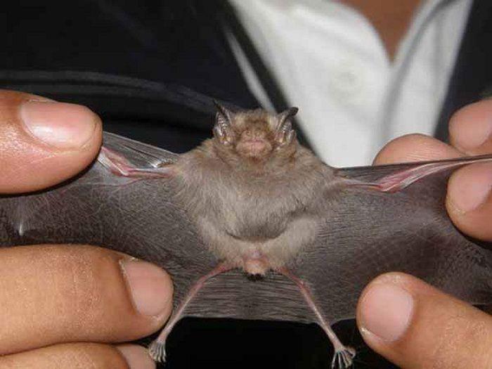 دانستنی های جالبی درباره سنجاب ها + معرفی کوچکترین پستانداران