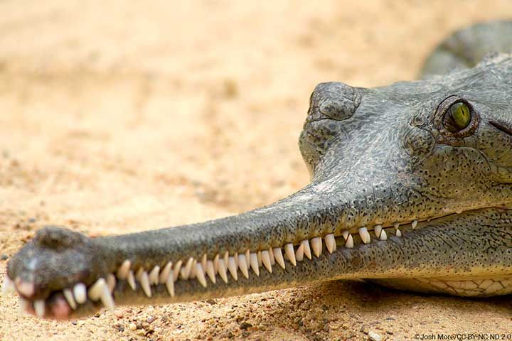 معرفی زیباترین حیوانات جهان + عجیب ترین حیوانات جهان