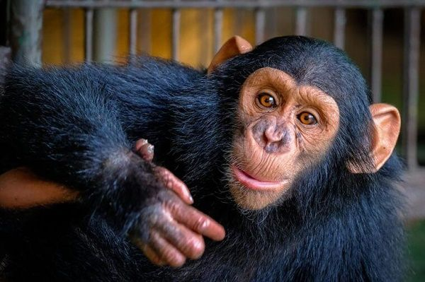 باهوش ترین حیوانات   از سگ های وفادار تا کلاغ های سخن چین