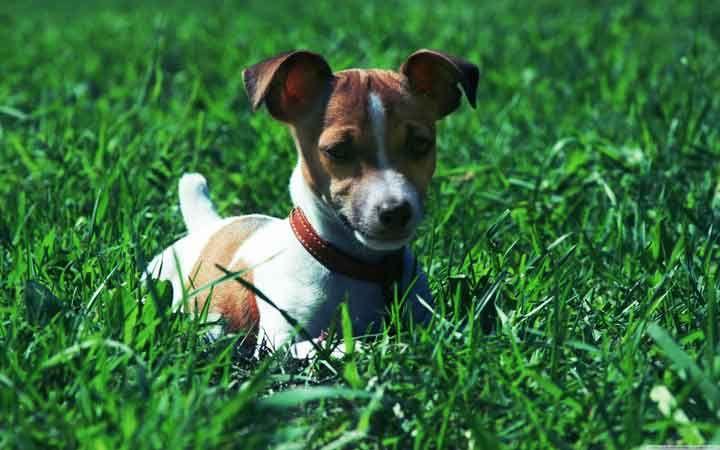 محبوب ترین سگ های دنیا + بایدها و نبایدهای غذایی سگ ها
