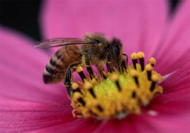 تعبیر خواب زنبور   دیدن زنبور در خواب چه معنایی دارد؟