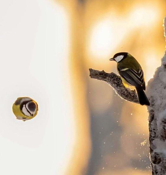 با پرنده هما آشنا شوید | همای سعادت پرنده افسانه ای همراه با عکس