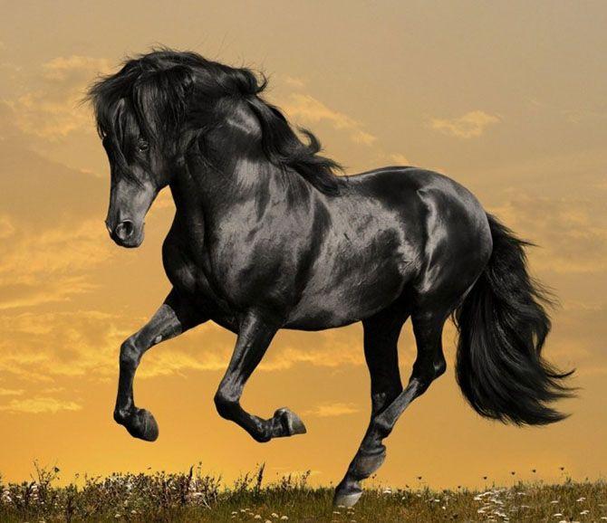 تعبیر خواب اسب   دیدن اسب در خواب چه معنایی دارد؟