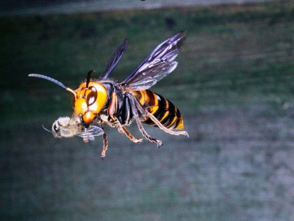 تعبیر خواب زنبور | دیدن زنبور در خواب چه معنایی دارد؟