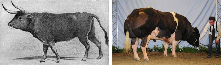 حیوانات امروزی در گذشته چه شکلی بودند | از فیل ها تا اسب ها