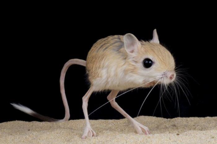 عکس های کوچک ترین حیوانات جهان + بزرگ ترین حیوانات خانگی