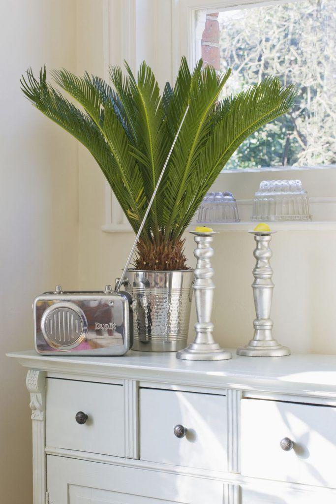بهترین گل های آپارتمانی با نگهداری ساده | از فیکوس تا آلوئه ورا