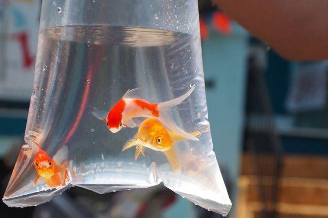 نگهداری از ماهی قرمز عید | شرایط نگهداری و معرفی غذاهای ماهی قرمز