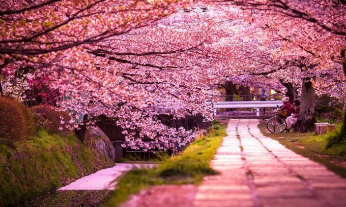 دانستنی های جالب در مورد فصل بهار | شگفتی های عروس فصل های سال