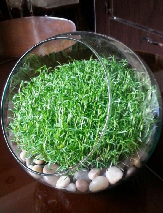 مدل سبزه عید نوروز 98 + آموزش کاشت انواع سبزه برای عید 1398