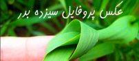عکس پروفایل سیزده بدر 98 + متن های سیزده بدر و روز طبیعت 1398