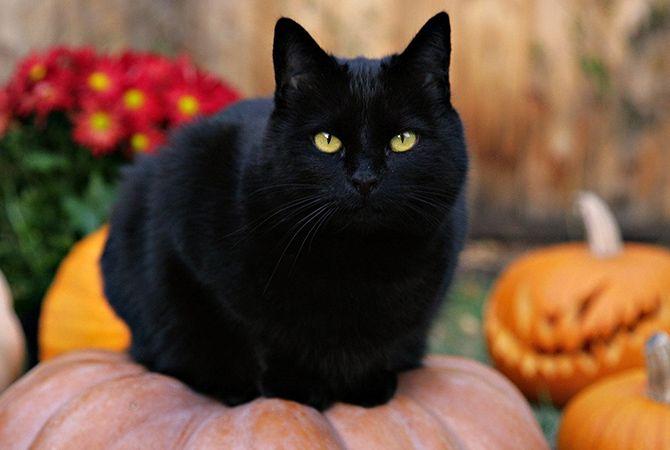 تعبیر خواب گربه سیاه | دیدن گربه سیاه در خواب چه معنایی دارد؟