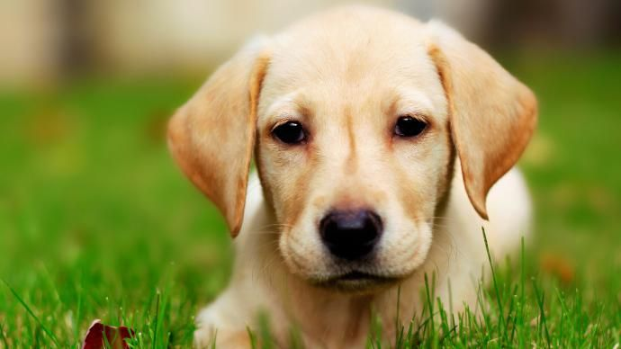 تعبیر خواب سگ   دیدن سگ در خواب چه معنایی دارد؟