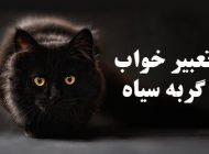 تعبیر خواب گربه سیاه   دیدن گربه سیاه در خواب چه معنایی دارد؟