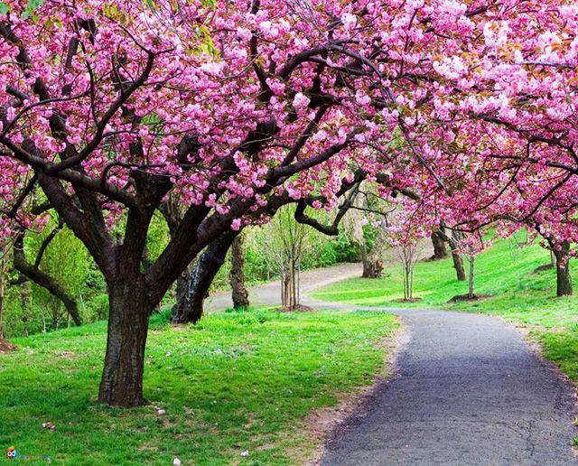 انشا درباره فصل بهار | انشای ادبی و توصیفی درباره بهار و زیبایی های آن