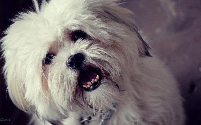 تعبیر خواب سگ | دیدن سگ در خواب چه معنایی دارد؟