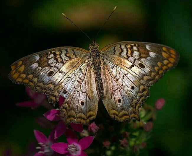تعبیر خواب پروانه | دیدن پروانه در خواب چه معنایی دارد؟